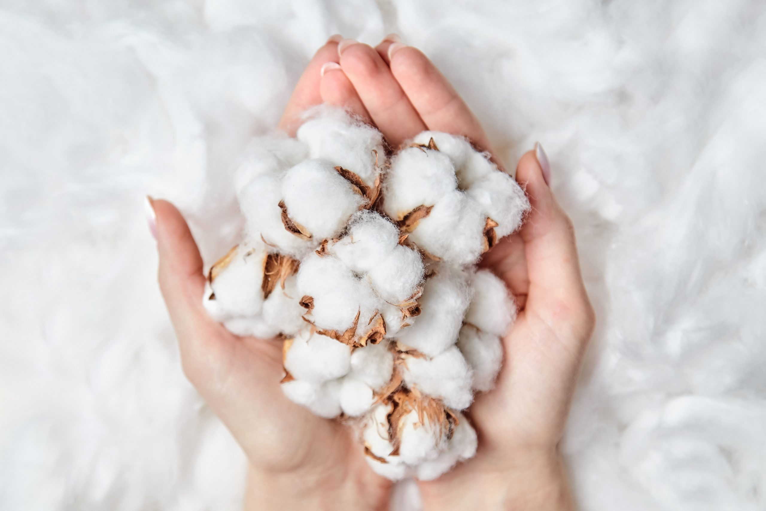 industria del algodón